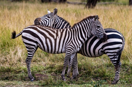 DSC_0191 Africa, Africa V, Kenya, Masai Mara, Zebra Café.jp
