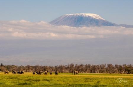 _DSC2717 Africa, Africa V, Ambosseli, Elefante, Kenya, Monte