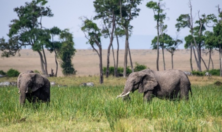 DSC_0106 Africa, Africa V, Elefante, Kenya, Masai Mara.jpg