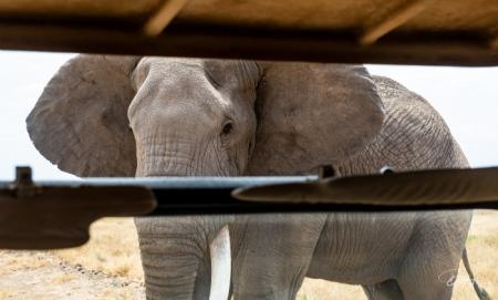 DSC_0257-2 Africa, Africa V, Ambosseli, Elefante, Kenya.jpg