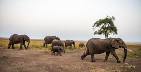 DSC_0426-3 Africa, Africa V, Elefante, Kenya, Masai Mara.jpg