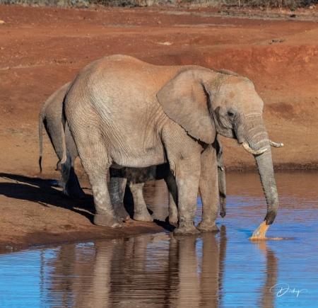 DSC_3558 Africa V, Elefante, Sur Africa.jpg