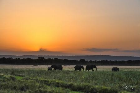 DSC_4781 Africa, Africa V, Elefante, Kenya, Masai Mara, Pais
