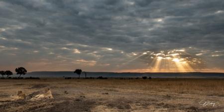 DSC_0292-2 Africa, Africa V, Kenya, leon, Masai Mara, Paisaj
