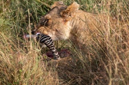 DSC_0944 Africa, Africa V, Kenya, leon, Masai Mara.jpg
