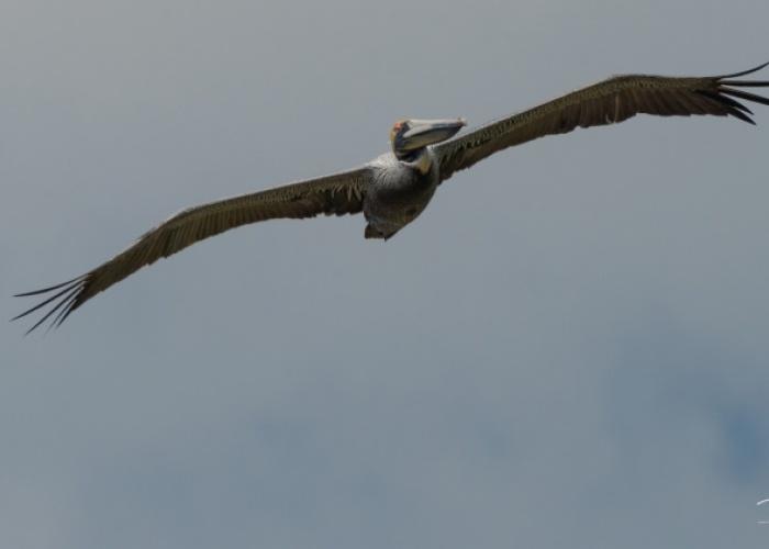 Aves en la Costa del Sol