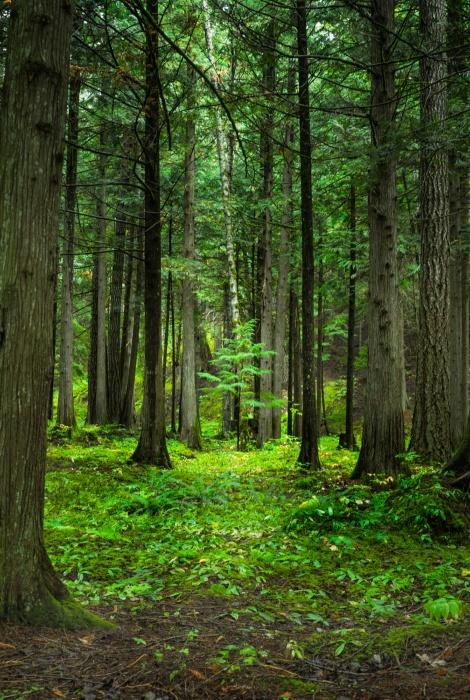 Bosques sin caminos